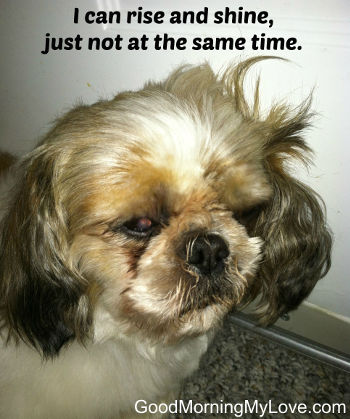 Funny Good Morning Messages_Cute Dog