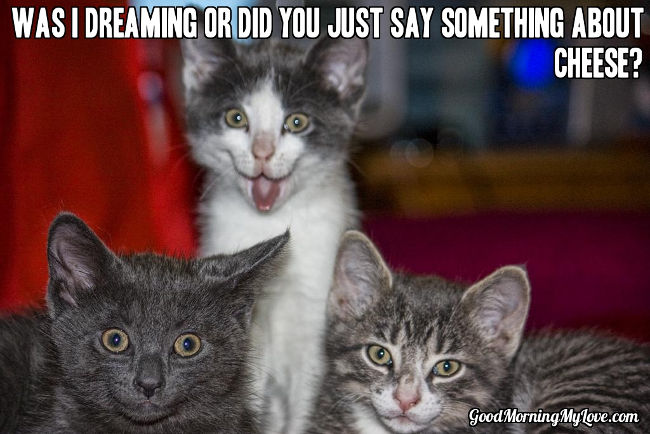 Funny Good Morning Meme_Silly Kitten Cheese 32 good morning memes for her, him & friends funny & beautiful