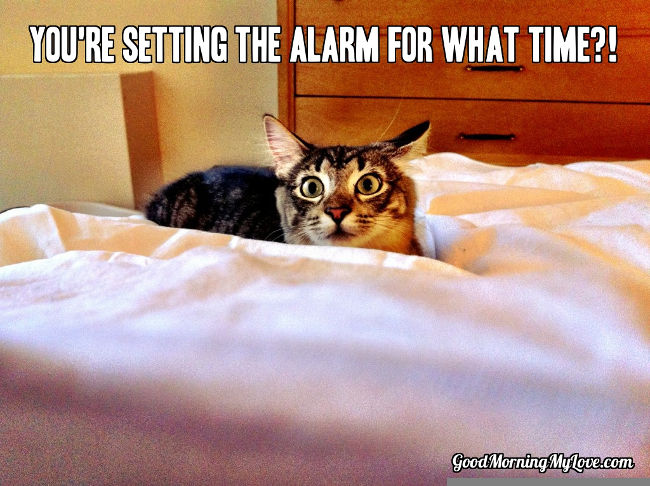 Wake up memes cat 32 good morning memes for her, him & friends funny & beautiful
