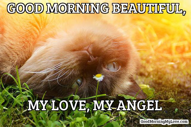 32 Good Morning Memes For Her Him Friends Funny Beautiful