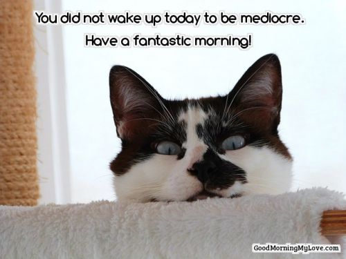 good morning quotes cute cat