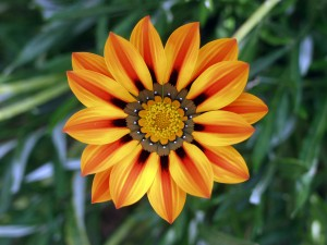 Good Morning Love Wallpaper_Orange Flower