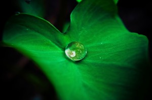 Gud Morning Wallpaper_Dewdrop on Green Leaf Reflection