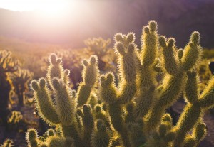 Wallpaper good morning_Sun on Cactus