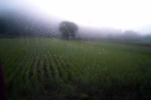Wallpaper of good morning_Dew on Spider web